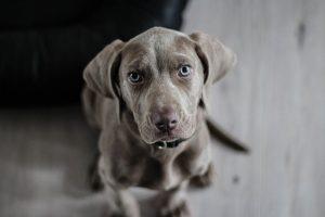 ביטוח לכלבים