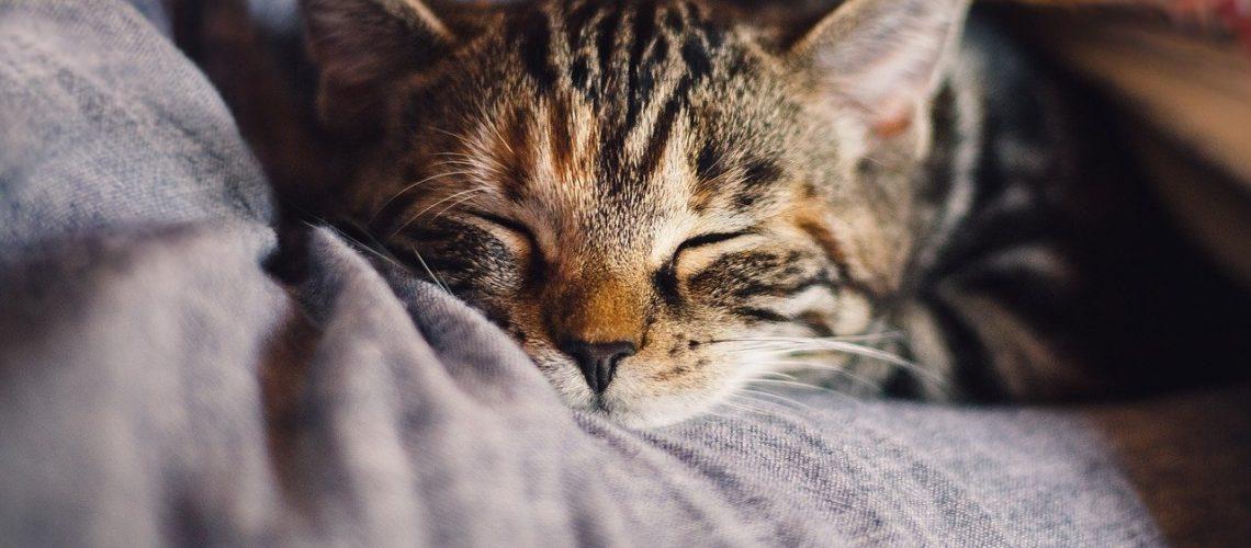 חיסונים לחתולים